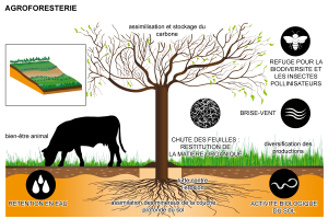 Agroforesterie_intro_1_.png